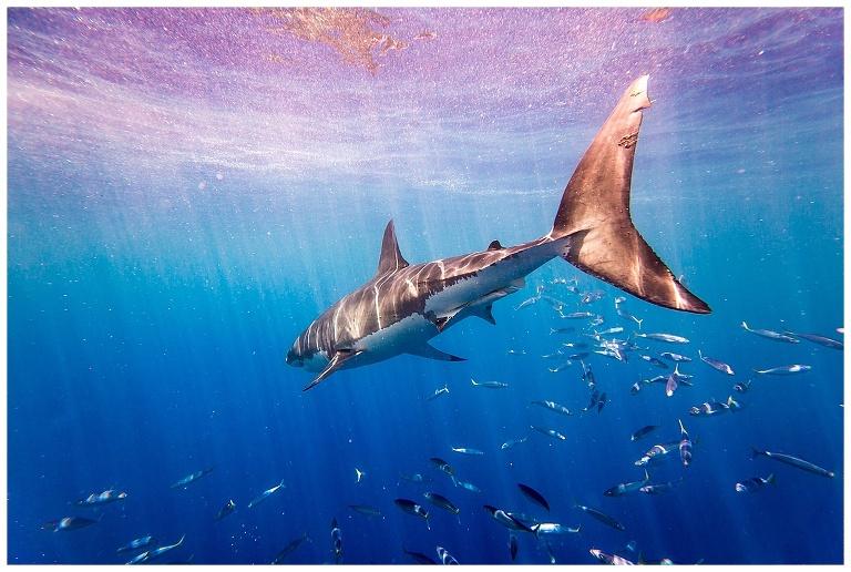 Shark-Wedding-Photography_0002