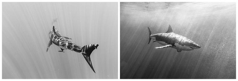 Shark-Wedding-Photography_0005