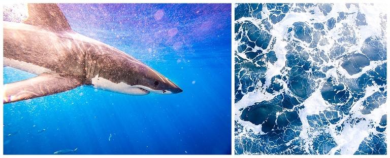 Shark-Wedding-Photography_0006